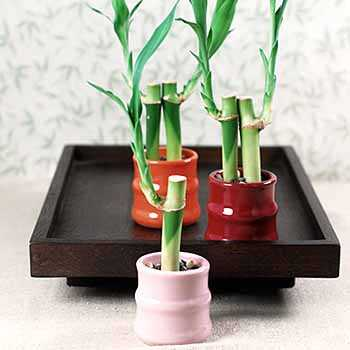 mini_bamboo_favors_second