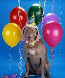 fiesta-para-perros