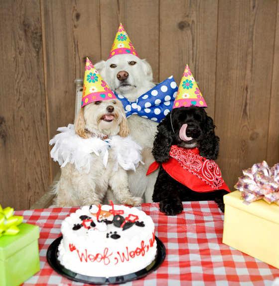 Fiestas para perros para adolescentes